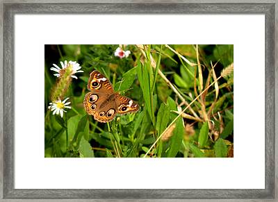 Framed Print featuring the photograph Buckeye Butterfly In Nature by Rosalie Scanlon
