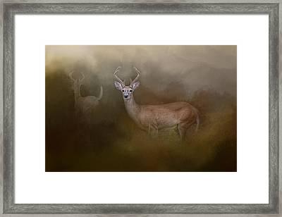 Bucks In August Framed Print