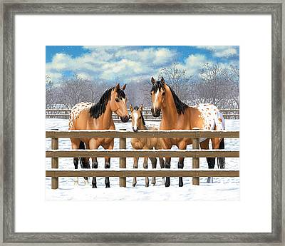 Buckskin Appaloosa Horses In Snow Framed Print by Crista Forest
