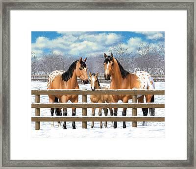 Buckskin Appaloosa Horses In Snow Framed Print by Crista Forest