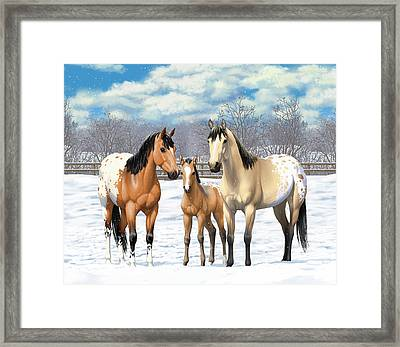 Buckskin Appaloosa Horses In Winter Pasture Framed Print