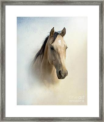 Buckskin Beauty Framed Print