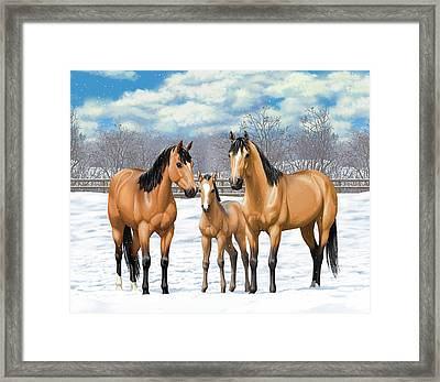 Buckskin Horses In Winter Pasture Framed Print by Crista Forest