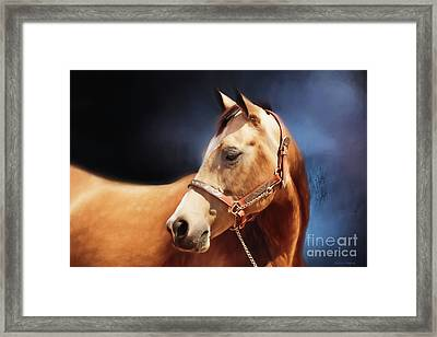 Buckskin On Blue Framed Print by Michelle Wrighton