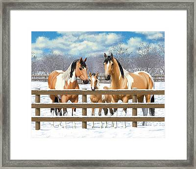 Buckskin Paint Horses In Snow Framed Print by Crista Forest