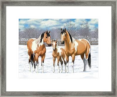 Buckskin Paint Horses In Winter Pasture Framed Print