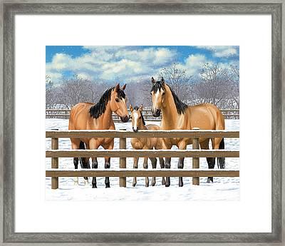 Buckskin Quarter Horses In Snow Framed Print