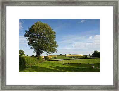 Bucolic Mid Devon Framed Print