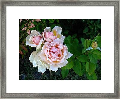 Framed Print featuring the photograph Bud And The Ladies by Fred Wilson