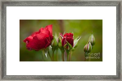 Bud Bloom Blossom Framed Print by Mike Reid