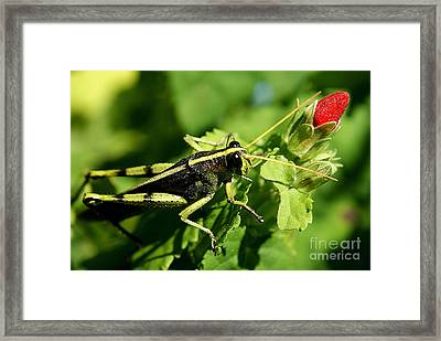 Framed Print featuring the photograph Bud Hopper by DiDi Higginbotham