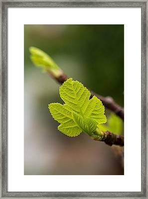 BUD Framed Print by Hyuntae Kim