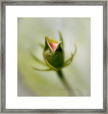 Bud Seeking Heaven Framed Print by Vicki Ferrari