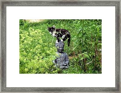 Buddha And Friend Framed Print