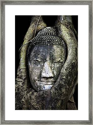 Buddha Head In Banyan Tree Framed Print by Adrian Evans