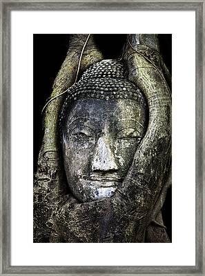 Buddha Head In Banyan Tree Framed Print by Adrian Evans