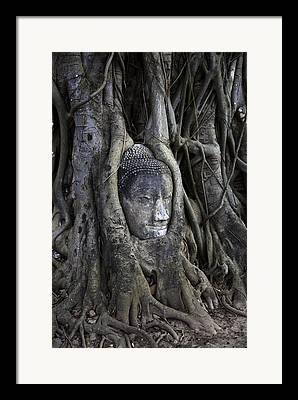 Ayutthaya Framed Prints