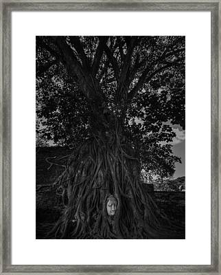 Buddha's Head Entwined In Banyan Tree Roots Framed Print by Dylan Newstead