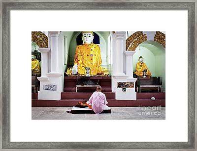 Framed Print featuring the photograph Buddhist Nun At Shwedagon Pagoda by Dean Harte