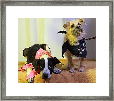 Buddies Framed Print by Pawsome Prints