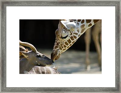 Framed Print featuring the photograph Buddies by Steve Stuller