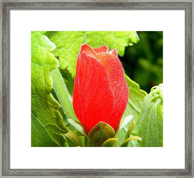 Budding Beauty Framed Print by Sherwanda Irvin
