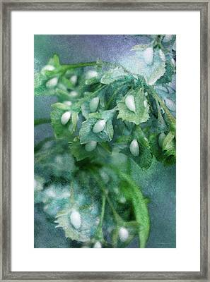 Budding Blue Framed Print