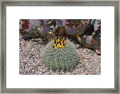 Budding Cactus Framed Print by Aimee L Maher Photography and Art Visit ALMGallerydotcom