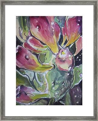 Budding Cactus In Spring IIi Framed Print by Aleksandra Buha