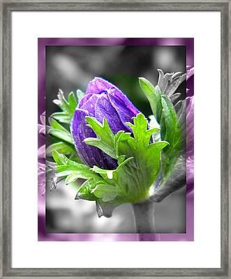 Budding Flower Framed Print