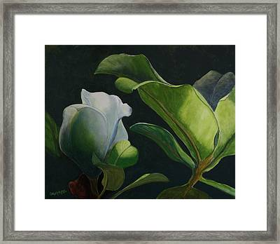 Budding Magnolia Framed Print