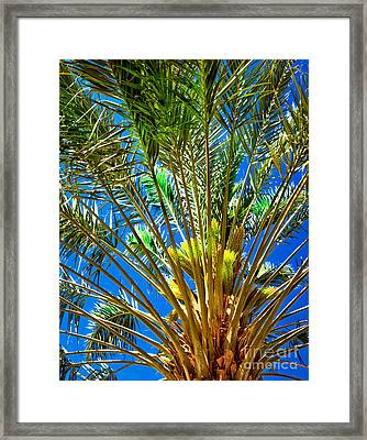 Budding Medjool Date Tree Framed Print