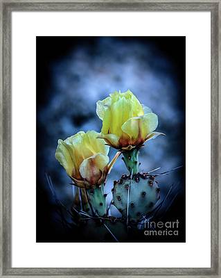 Framed Print featuring the photograph Budding Prickly Pear Cactus by Robert Bales