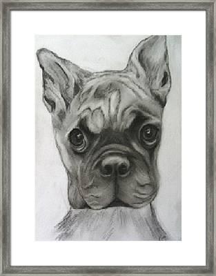 Buddy Boxer Framed Print
