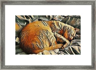 Buddy The Cat Napping Art Print Framed Print