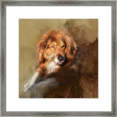 Buddy Framed Print by Theresa Tahara