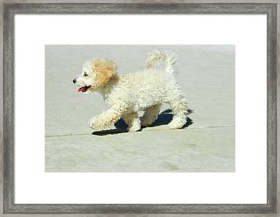 Buddy Walking The Straight And Narrow Framed Print