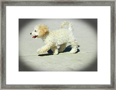 Buddy Walking The Straight And Narrow2 Framed Print