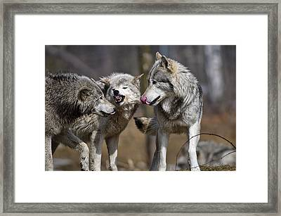 Framed Print featuring the photograph Buddy You Are Just Not Listening by Michael Cummings