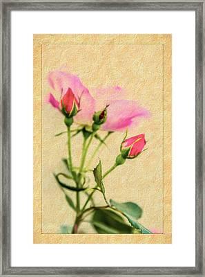 Buds And Bloom - Rose Floral Framed Print by Barry Jones