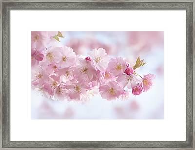 Buds And Blossom Framed Print by Jacky Parker
