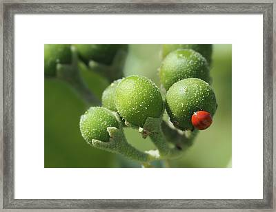 Buds And Bugs Framed Print