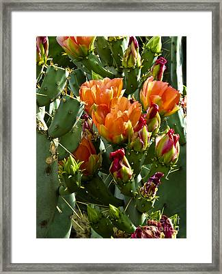 Buds N Blossoms Framed Print