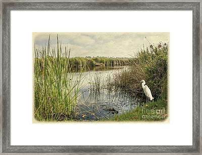 Buena Vista Lagoon-snowy Egret Framed Print
