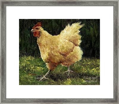 Buff Orpington Chicken Framed Print by Jill Musser