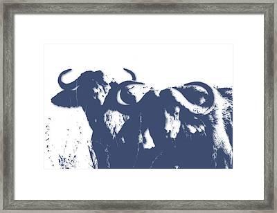 Buffalo 2 Framed Print by Joe Hamilton