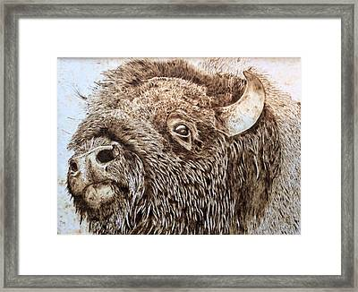 Buffalo Breath Framed Print by Sue O'Sullivan