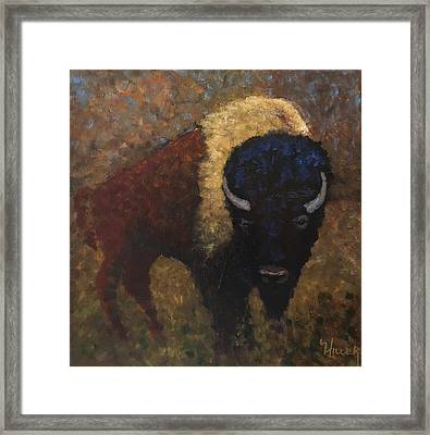 Buffalo Dream Framed Print
