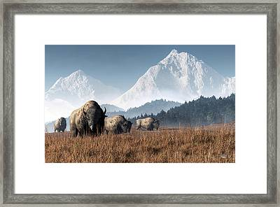 Buffalo Grazing Framed Print by Daniel Eskridge