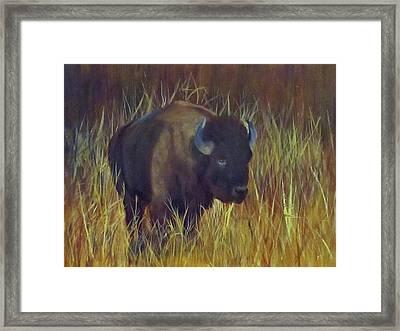 Buffalo Grazing Framed Print by Roseann Gilmore